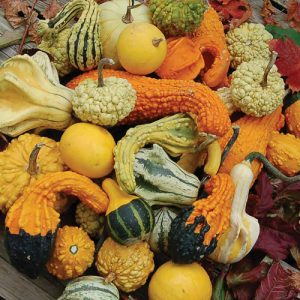 Image result for pics of gourds